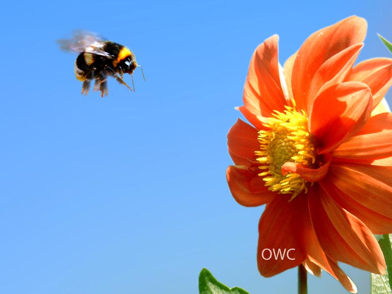 Organic Web Care Blog - How to Name Your Business