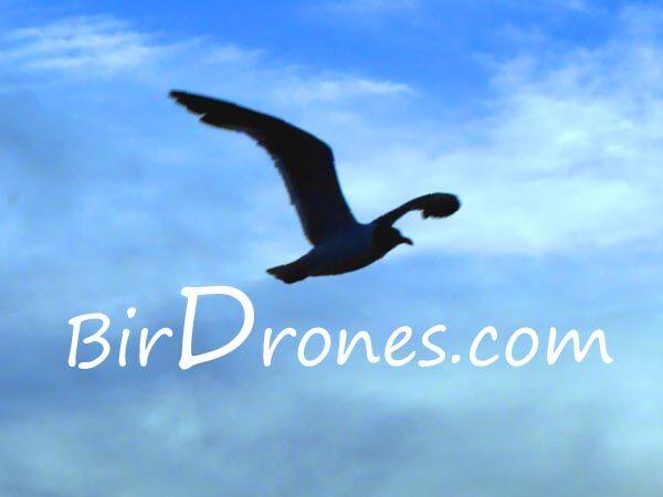 Premium Domain - BirdDrones.com