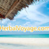 HerbalVoyage.com is available at OWC Auctions