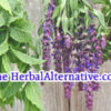 TheHerbalAlternative is available at OWC Auctions