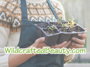 WildcraftedBeauty.com is for sale at OWC Auctions